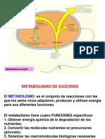 Metabolismo Celular 2