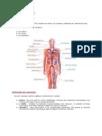 anatomie cardio-vasculaire