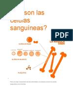 Qué Son Las Células Sanguíneas