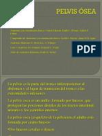 18.- Articulaciones, músculos y pelvimetría
