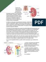 Urolitiasis.docx