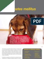 AV 28 Diabetes Mellitus