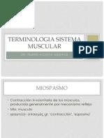 Terminologia Sistema Muscular