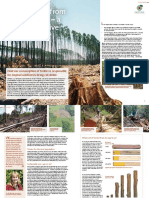 DriverDeforestation Timber ENG