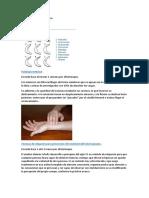 Fisioterapia Traumatológica.docx