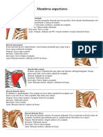 Músculo Origem e Inserção Membro Superior