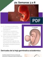 Generalidades de Embriología
