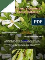 Armando Guédez Rodríguez - ¿Qué es la clorosis? ¿ Cómo tratarla?