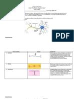 neurona maqueta