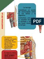 Anatomia de La Faringe