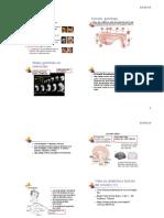 Sviluppo Prenatale