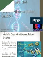 Estructura ADN 4° MEDIO
