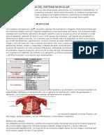 ANATOMIA Y FISIOLOGIA DEL SISTEMA MUSCULAR.docx