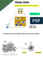 BIOLOGÍA CELULAR..pdf