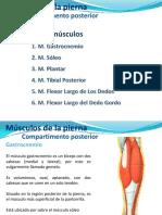 musculosposterioresdelapierna-121004135856-phpapp01