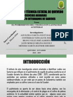 proyecto pis m.pptx