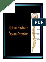 02 Sistema Nervioso y Órganos Sensoriales