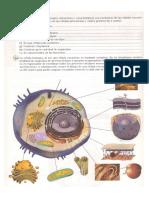 actividad celula