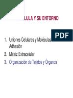 organizaci_n_de_tejidos_y_rganos.pdf