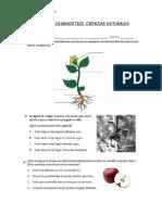 Prueba de Diagnostico Ciencias Naturales 4