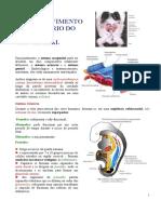 Aula 10 Embriologia Med 2008