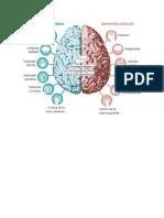 Los hemisferios cerebrales y sus funciones.docx