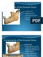 04 Periodontal Morphology Components of the Alveolar Bone
