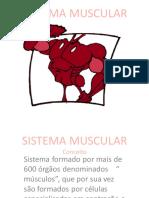 Sistema Muscularrrrr