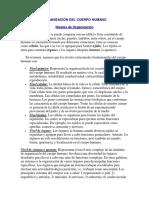 ORGANIZACIÓN DEL CUERPO HUMANO.docx