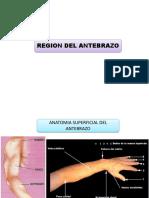 7 Antebrazo y Fosa cubital.pdf