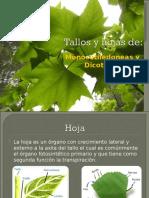 Tallos y hojas de mono y dico.pdf