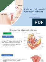 Aparato Reproductor Femenino Obstetricia