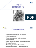 HONGOS TEMA42