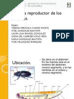 Tipos de Reproduccion de Los Insectos