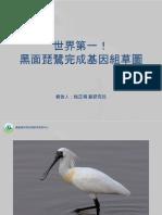 簡報檔-黑面琵鷺完成基因組草圖 20190307