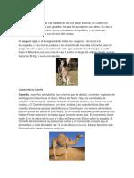 Características Canguro