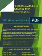 Plagas y Enfermedades Tara (1)Wilson