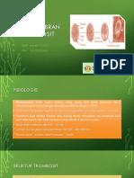 Biomembran Lia