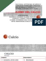 5. Metabolismo Del Calcio. Exposición Soma(1)(1)