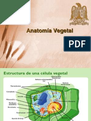 4 Anatomía Vegetal Raíz Tallo De La Planta