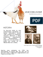 LEUCOSIS AVIAR.pptx