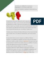 Unaenzimaes unaproteínaquecataliza las reacciones bioquímicas del metabolismo