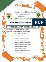 informe  de reconocimiento celular 2.docx