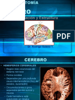 cerebro y areas de brodman