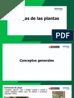 Plagas de las plantas MINAGRI feb19 (1).pdf