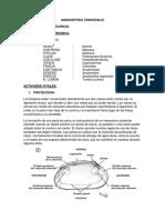 DESCRIPCION DE LA TUMBA CUCHARA.docx