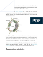 Celulas Animal y Vegetal