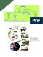 Apuntes complementarios Ecologia