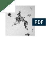 TEM Micrograph AgNPs