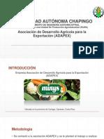 EIUPA Adapex